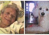 Idosa se despede de cachorra de estimação antes da morte; veja o vídeo