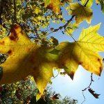 Como-Cuidar-das-Plantas-no-Outono-14