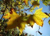 Outono 2015: menos chuva e menos frio