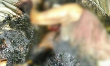 Vizinhos sentem cheiro de gás e mulher é encontrada morta queimada em Araucária