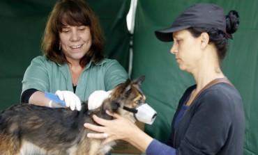 Microchipagem de cães acontece nesta quarta-feira no Adolescentro Costeira