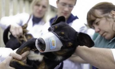 Mais de 300 animais foram atendidos em Mutirão da Saúde Animal no Iguatemi