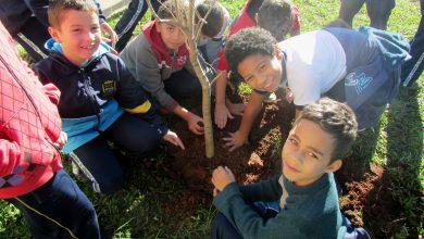 Foto de Semana do Meio Ambiente contou com ações em parques e escolas da cidade