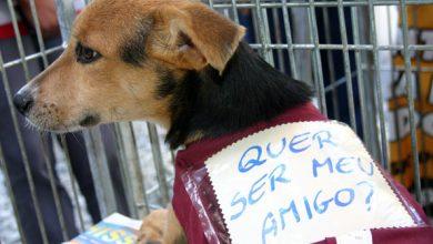 Foto de Feira de Adoção de cães toda sexta-feira no Parque Cachoeira