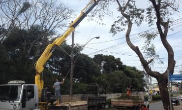 Serviço de poda e corte de árvores está sendo realizado por toda a cidade
