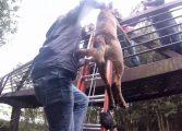 Bombeiros resgatam cadelinha jogada de passarela em Curitiba, veja o vídeo