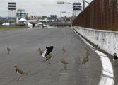 Fim do autódromo de Pinhais impulsiona nova pista em Campo Largo
