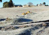 """Araucária e Região se prepara para """"Semana Era do Gelo' e não se descarta neve na Região Sul"""