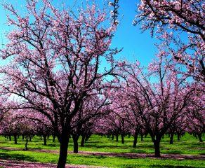 Com fenômeno La Niña, primavera promete ser chuvosa e ter temperaturas amenas