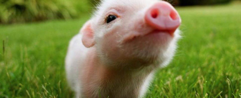 Pets exóticos: como ter um?
