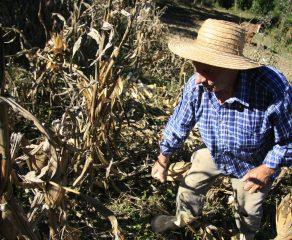 Prefeitura de Araucária auxilia agricultores na declaração de imposto territorial rural