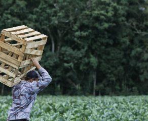 Produtor Rural, receba o representante do Censo Agropecuário 2017