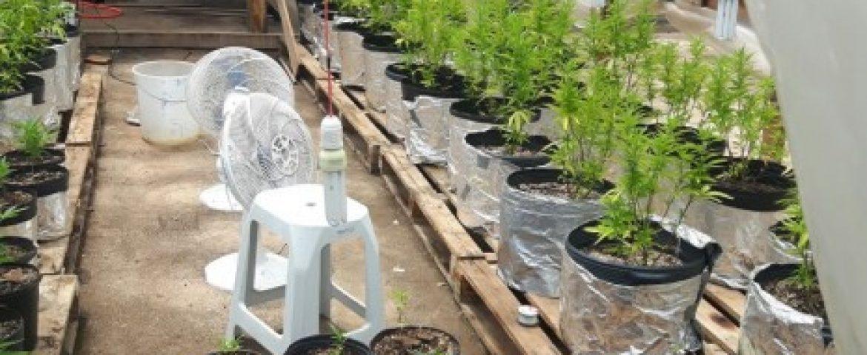 Bombeiros encontram plantação de maconha em Centro de Reabilitação para dependentes