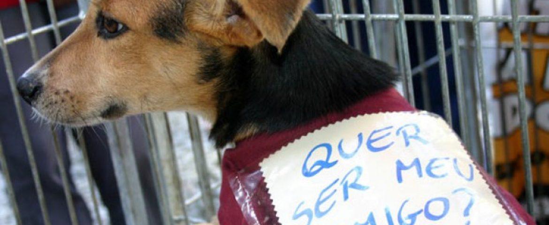 Araucária terá feira de adoção de cães no Parque Cachoeira