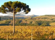 8ª Caminhada Internacional na Natureza de Araucária será em 19 de maio