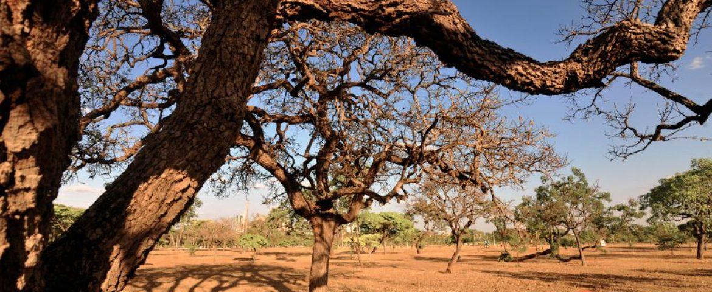 Região teve o segundo abril mais seco desde 2002; frio intenso ainda está longe