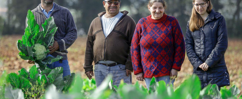 Araucária triplica compra do produtor local para alimentação escolar