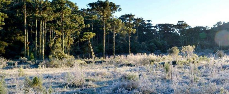 Previsão é de mais frio em Curitiba e neve no Sul do País neste fim de semana