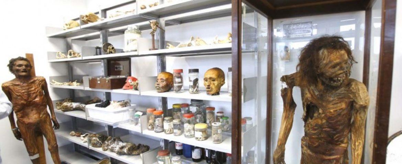 Corpos mumificados, fetos, esqueletos. Você já conhece o Museu do IML?
