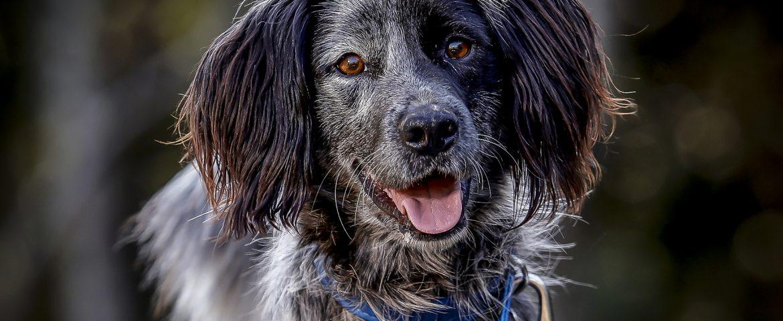 Segue o cadastro para castração de cães e gatos de famílias de baixa renda e de protetoras