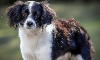 Feira de adoção de cães e microchipagem ocorrerão neste sábado (20)