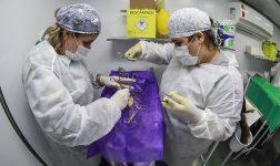 Castração Solidária começa para cães e gatos da região do CRAS Califórnia