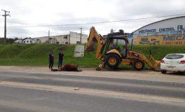 Morte de quatro cavalos intriga moradores e mobiliza equipe da prefeitura na RMC