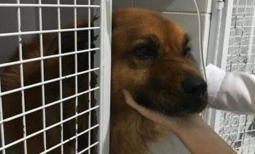 Cachorro reage contra adolescente armado e é baleado ao proteger família