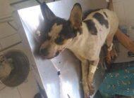 Curitibanos marcam duas manifestações no Carrefour após morte de cachorro em loja de Osasco