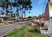 Ventos derrubam pinheiro, que derruba postes e deixa moradores sem energia