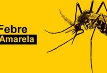Foto de Secretaria da Saúde alerta sobre circulação do vírus da febre amarela no Paraná
