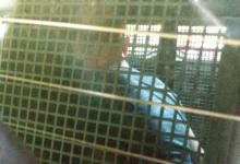 Foto de Suspeito pelo estupro de três mulheres em farmácia de Curitiba é detido