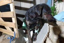 Foto de Bêbado invade casas e esfaqueia cães de vizinhos em Curitiba