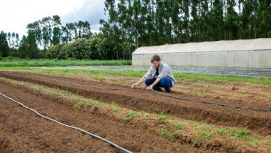 Foto de Estiagem castiga agricultores do Paraná e já falta água para irrigação em algumas regiões