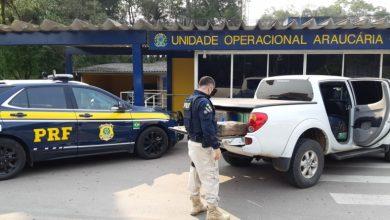 Foto de PRF apreende 685 quilos de maconha e recupera caminhonete roubada em Araucária